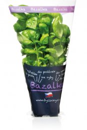 Bazalka v květináči
