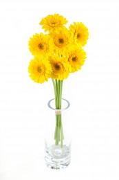 Gerbery mini žluté vázané 7ks - délka 50 cm