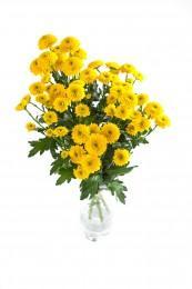 Chryzantémy žluté vícekvěté vázané 5ks - 45 cm