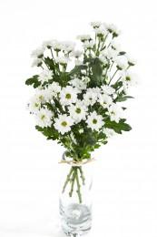 Chryzantémy bílé vícekvěté kopretinové vázané 5ks - 45 cm