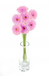 Gerbery mini růžové vázané 7ks - délka 50 cm