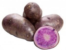 Brambory fialové konzumní pozdní varný typ B, síť 1kg