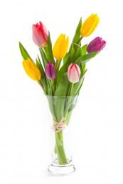 Tulipány mix barev vázané 7ks - délka 30 - 40cm