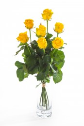 Růže žluté vázané 7ks - délka 40 cm