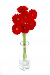 Gerbery mini červené vázané 7ks - délka 50 cm