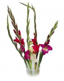 Gladioly mix barev vázané 5ks - délka 60cm