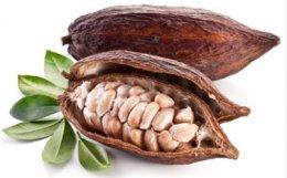 Čerstvý kakaový bob (cca 700g)