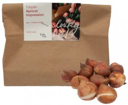 Loukykvět cibule Tulipán Apricot Impression, sáček