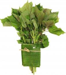 Perila křovitá (Basil leaf), svazek